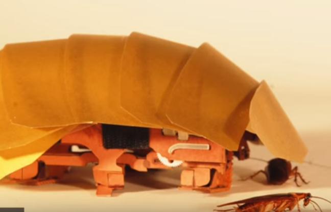 648x415_cram-prototype-robot-inspire-cafards-pourrait-faciliter-recherche-personnes-ensevelies-sous-decombres