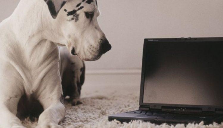 pets company